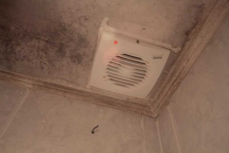 Why & How to Prevent Mold Growth in Las Vegas Homes - ceiling