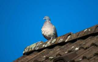 Is It Time to Replace Your Roof