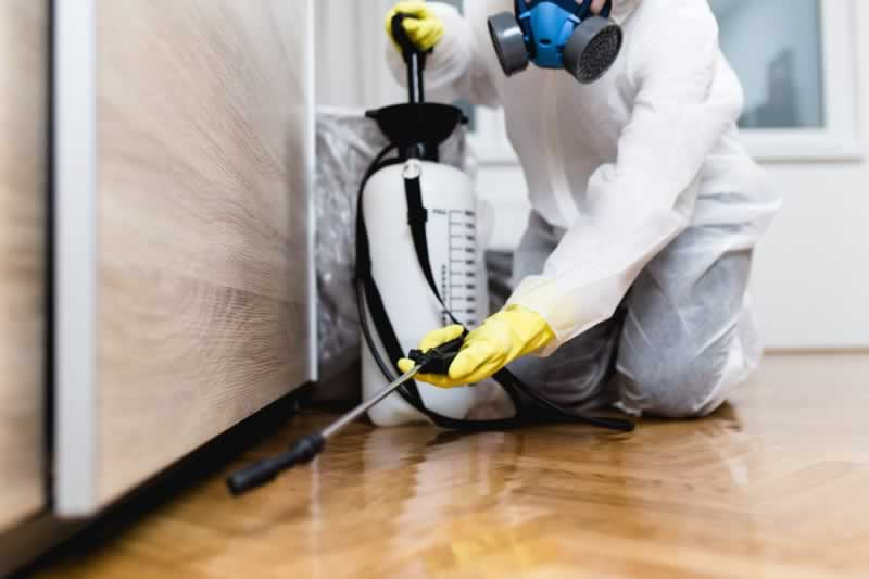 10 Reasons You Need to Call Pest Control