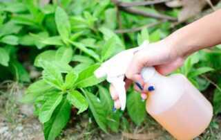 Homemade Pesticides - spraying