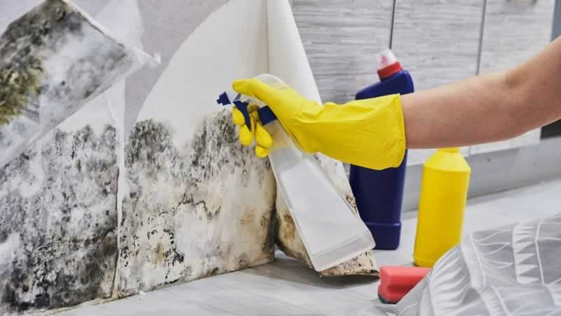 Important Tips for Mold Remediation - spraying mold
