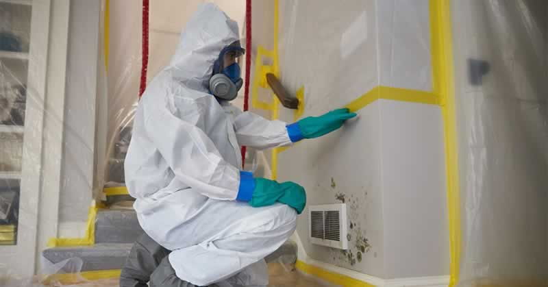 Important Tips for Mold Remediation