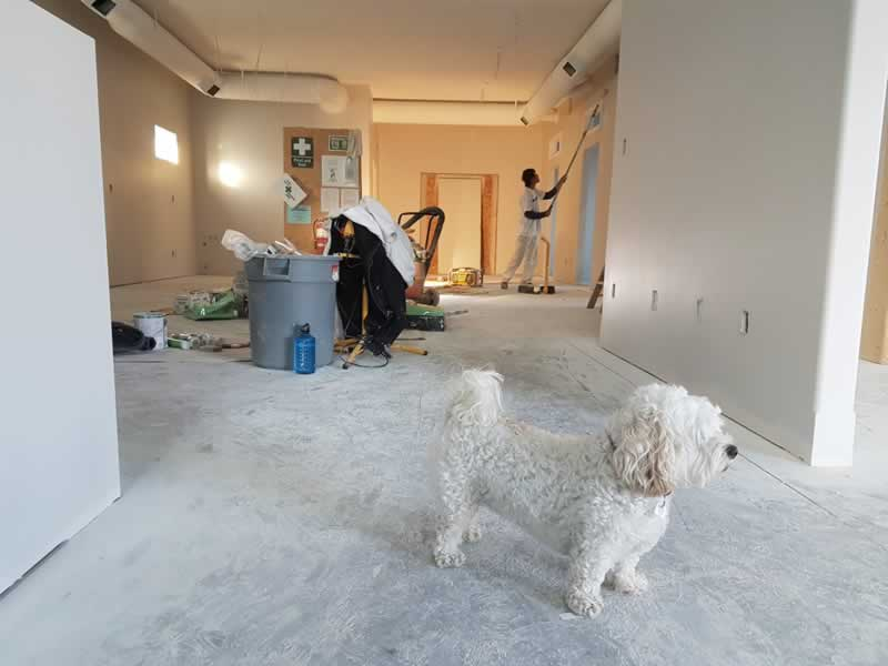 The Top 3 Tips To Prolong The Life Of Your Property From Certified Experts - renovating