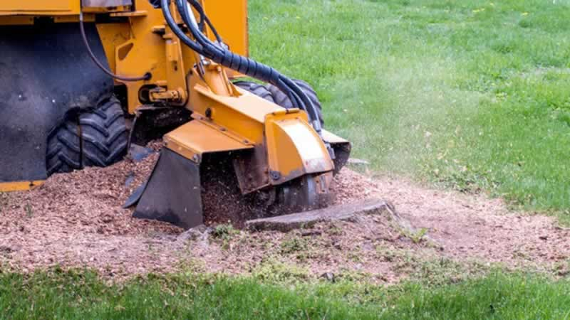 5 Steps To Properly Grind Your Tree Stump With A Stump Grinder - grinding