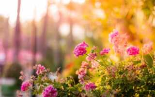 6 Pieces Of Advice To Maintain A Beautiful Garden - flowers