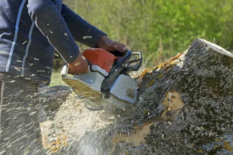 A 5-Step Guide To Planning And Preparing For A Tree Removal - cutting