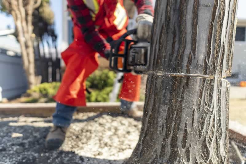 A 5-Step Guide To Planning And Preparing For A Tree Removal