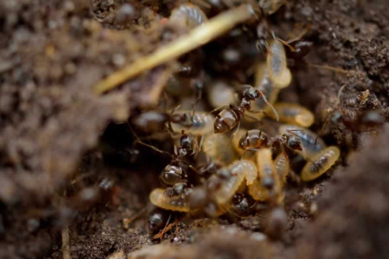 Effective Ways To Get Rid Of Termites And How To Prevent Their Appearance