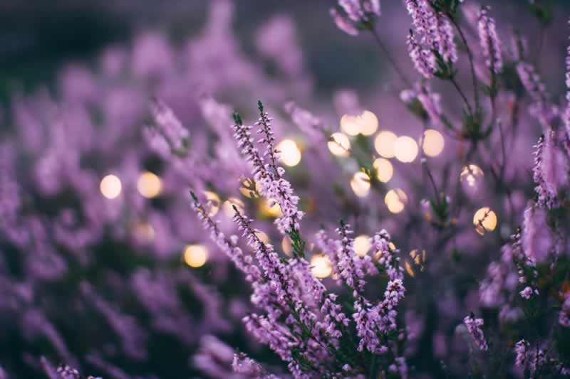 Essential Oils to Wooden Surfaces - lavender