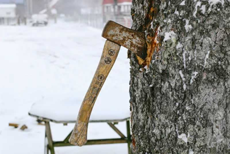 Hire the Right Arborist With These Useful Tips