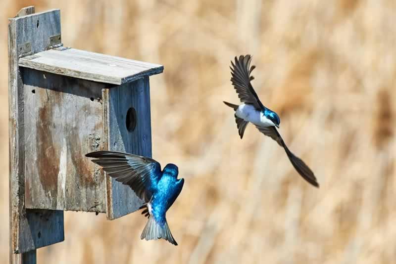 Understanding the Benefits of Having a Birdhouse - birdhouse