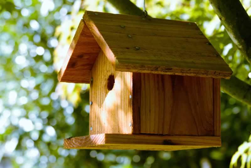 Understanding the Benefits of Having a Birdhouse