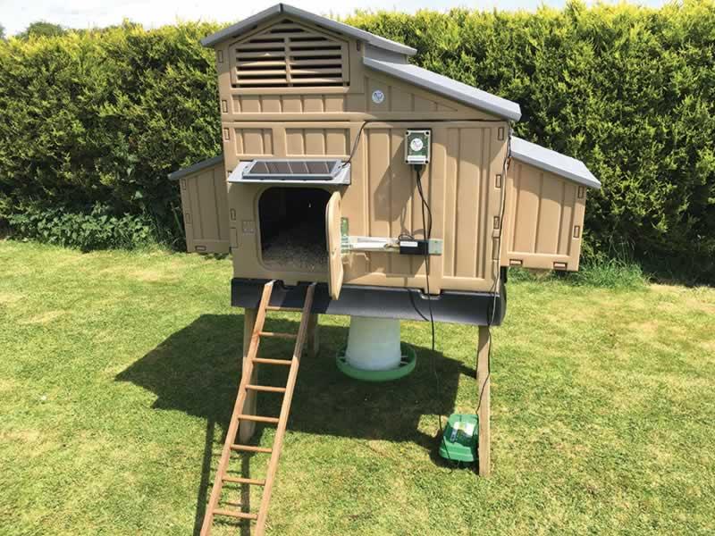 Why You Need an Automatic Chicken Coop Door - chicken coop