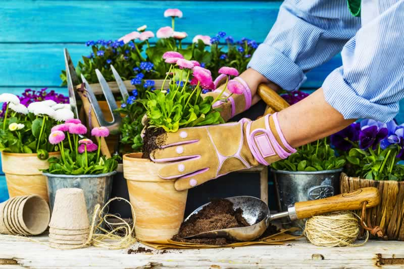 10 Tips for An Effortless Garden
