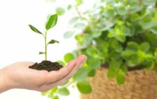 5 Secrets to Making Your Plants Grow Faster