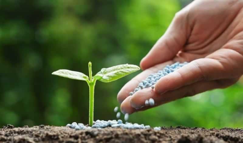 5 Secrets to Making Your Plants Grow Faster - fertilizer