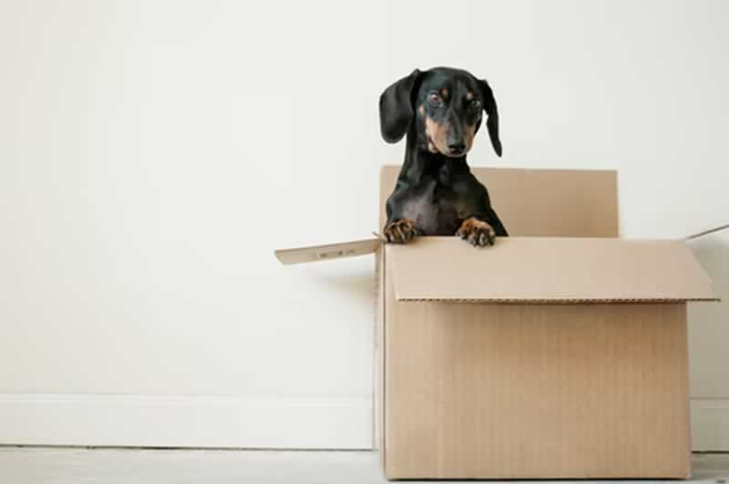 Are You Currently Moving - dog in a box