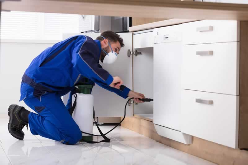 How Much Do Pest Exterminators Cost