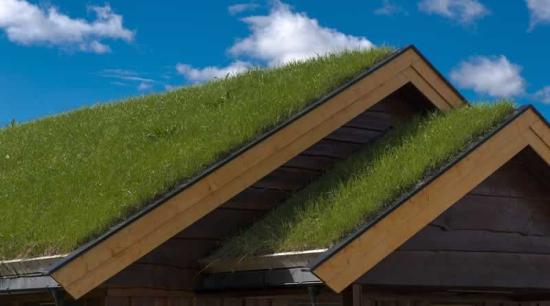 Three Advantages to Going Green in Roofing and Contracting - grass on roof