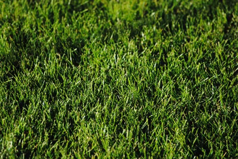 Want a Good Looking Lawn - lawn