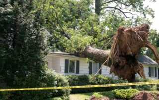 4 Hidden Threats To Your Home - fallen tree