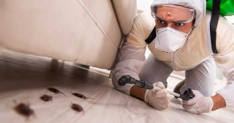 Choosing the correct pest control supplier - cockroaches