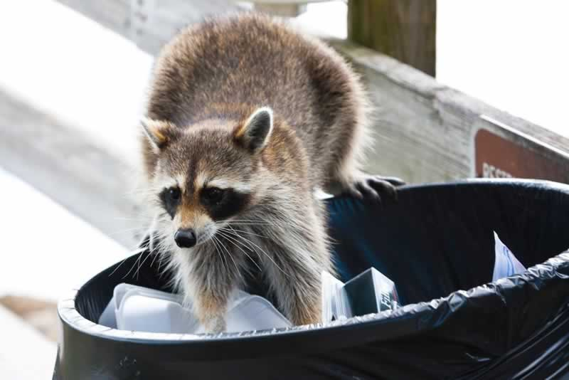 How to Handle Unwanted Animals at Your Business